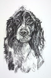 Springer Spaniel IV by April Shepherd -  sized 12x18 inches. Available from Whitewall Galleries