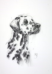 Dalmatian II by April Shepherd -  sized 11x17 inches. Available from Whitewall Galleries