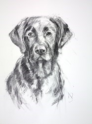 Chocolate Labrador II by April Shepherd -  sized 18x24 inches. Available from Whitewall Galleries