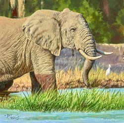 Elephant in the Luangwa Valley, Zambia by Tony Forrest -  sized 12x12 inches. Available from Whitewall Galleries