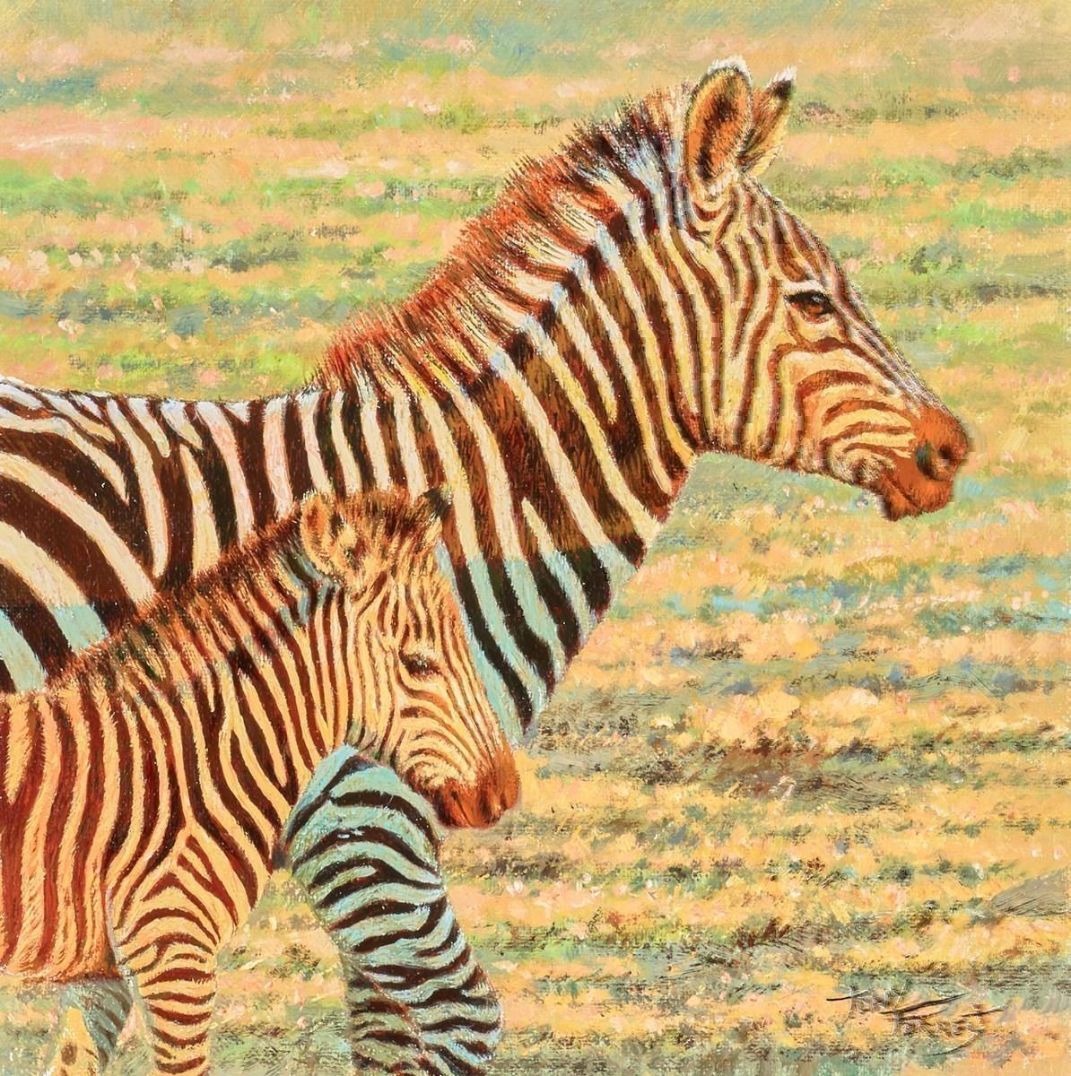 Burchells Zebra, Maasai Mara