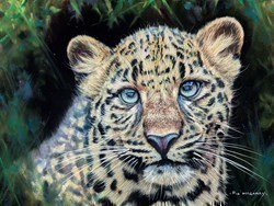 Leopard by Pip McGarry -  sized 16x12 inches. Available from Whitewall Galleries