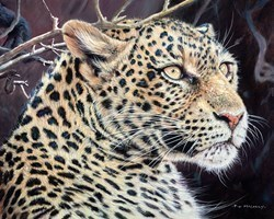 Leopard Portrait by Pip McGarry -  sized 20x16 inches. Available from Whitewall Galleries