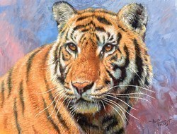 Tiger Study I by Tony Forrest -  sized 10x8 inches. Available from Whitewall Galleries