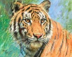 Tiger Study II  by Tony Forrest -  sized 10x8 inches. Available from Whitewall Galleries
