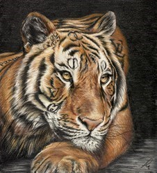 Designer Tiger by Hayley Goodhead -  sized 10x11 inches. Available from Whitewall Galleries