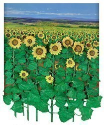 Girasoles by Ramon Vila -  sized 35x44 inches. Available from Whitewall Galleries