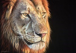 Lion III by Darryn Eggleton -  sized 27x19 inches. Available from Whitewall Galleries
