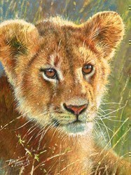 Lion Cub  by Tony Forrest -  sized 8x10 inches. Available from Whitewall Galleries