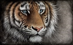 Brave Face by Colin Banks - Dye Sublimation sized 32x20 inches. Available from Whitewall Galleries