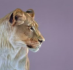 Queen of the Savannah by Darryn Eggleton - Limited Edition on Canvas sized 18x18 inches. Available from Whitewall Galleries
