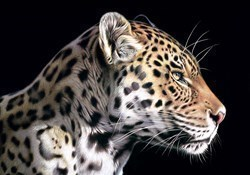 The Wild Side I by Darryn Eggleton - Box Canvas sized 20x14 inches. Available from Whitewall Galleries